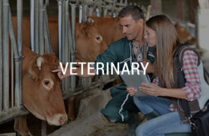 Explore Your Industry - Veterinary